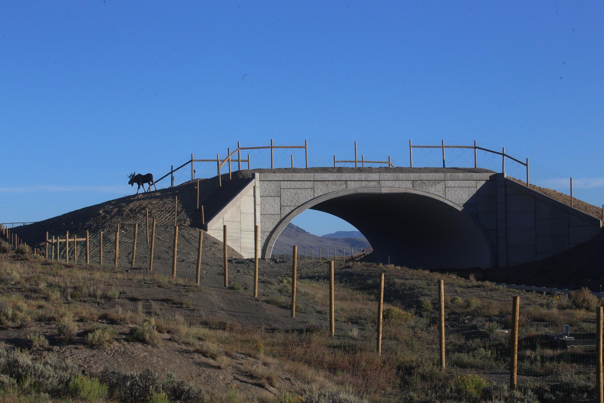 mooseoverpass